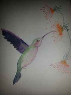 Humming bird in pastels Pastels, Painting & Drawing, Find Art, Photo Art, Bird, Drawings, Prints, Birds, Sketches
