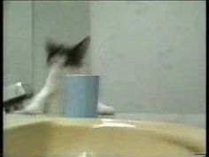 Cat bloopers - find this and more at my NEW VIDEO BLOG!