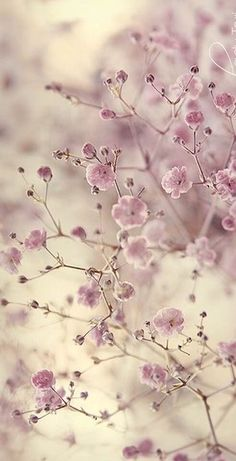 Blumen Design ,post_tags] Builder's Dust – Removing It Have you ever had renovations or alterations Frühling Wallpaper, Flower Phone Wallpaper, Nature Wallpaper, Wallpaper Backgrounds, Wallpaper Quotes, Flowers Nature, Pretty Flowers, Pink Flowers, Beautiful Flowers Wallpapers