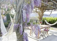 Wisteria covered per