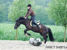 The Most Overlooked Fundamental in Flat Training - Horse Collaborative