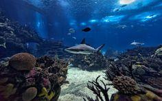 O Oceanario de Lisboa foi reconhecido como o melhor do Mundo