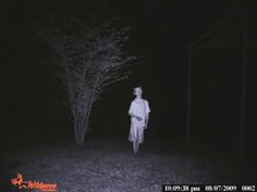 """En el bosque de Cannock Chase, localidad de Staffordshire en Inglaterra, parece encontrarse el fantasma de un niño misterioso. Existen numerosos informes de la aparición del niño, incluyendo la foto que te mostramos, inmortalizada gracias a una """"camara trampa"""" colocada en la rama de un árbol."""