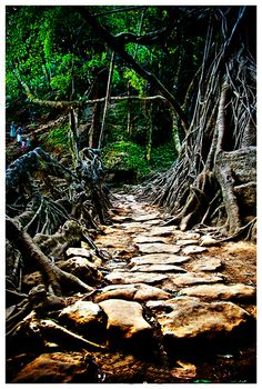 Meghalaya's double-decker and single-decker root bridges are unique in the world and are a sight to behold. The bridges are tangles of massive thick roots, which have been intermingled to form a bridge that can hold several people at a time.g bridges are made from the roots of the F Khasi people have been trained to grow these bridges across the raised banks of streams to form a solid bridge, made from roots.