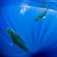 Ballenas / Whales