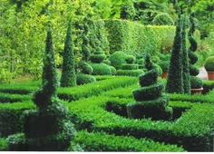 perfect boxwood spirals and cones and hedges