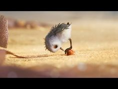 Watch a Bird Overcome Fear in Pixar's Heart-Melting New Short Film Piper Pixar Shorts, Disney Shorts, Disney Pixar, Short Film Youtube, Movie Talk, Films Cinema, Film D'animation, Cute Birds, Animation Film