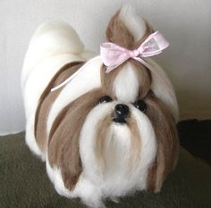 Shih Tzu - Beautiful - Perfect