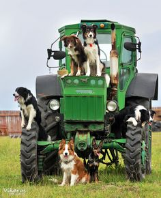 Border Collies and mixed breed - border party by Vikarus.deviantart.com
