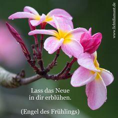 Engel des Frühlings