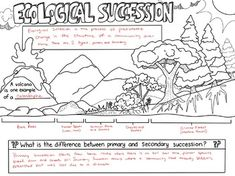 Ecological Succession Sketch Notes Diagram Science Lesson Plans, Science Lessons, Ecological Succession, Sketch Notes, Easy Science, Middle School Science, Classroom Inspiration, Interactive Notebooks, Teacher Pay Teachers