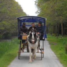 Jaunting Cart in Kilarney National Park, Ireland Ours did not have a cover. It was a sunny day! Irish Luck, Luck Of The Irish, Irish Roots, Irish Eyes, Emerald Isle, Isle Of Man, Going Home, Ireland Travel, British Isles