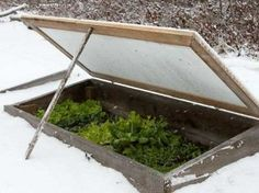 Vegetable Garden In The Snow?  Here's 5 Ways To Do It