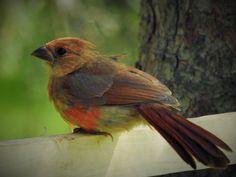 Parrot, Birds, Landscape, Animals, Parrot Bird, Animales, Scenery, Animaux, Bird