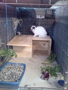 Training Your Pet Parrot Bunny Cages, Rabbit Cages, Dog Cages, House Rabbit, Rabbit Toys, Pet Rabbit, Bunny Care Tips, Indoor Rabbit Cage, Rabbit Information