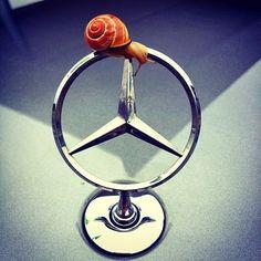 Mercedes Benz Logo - Badge - Emblem