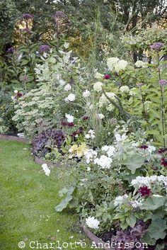 border inspiration Shade Garden, Garden Plants, Landscape Design, Garden Design, Silver Plant, Greenhouse Gardening, Garden Cottage, Garden Borders, Enchanted Garden