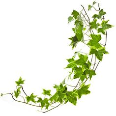 Muratti hoito. Muratti on melko helpohoitoinen. Katso kaikki kasvatusvinkit. Herbs, Flowers, Art Inspo, Decor, Inspiration, Plants, Biblical Inspiration, Decoration, Herb