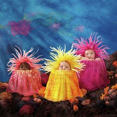 Browse through images in Anne Geddes' Under The Sea collection. The beautiful babies featured in 'Under The Sea' appear as characters in their own underwater pantomime (yet with a craft-like and innocent flavor) from the chubby little merm. Anne Geddes, Sea Creature Costume, Under The Sea Costumes, Sea Anemone, Cute Baby Pictures, Thing 1, Photographing Kids, Sea Creatures, Children Photography