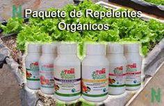 osCurve Agricultor: Fungicidas Ecológicos- repelentes. http://oscurveagricultor.blogspot.com