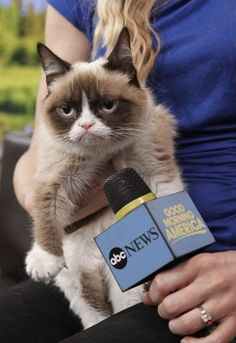 Grumpy Cat On Good Morning America! #grumpycat #GMA #TV