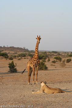 Africa | Wildlife | Safari.  Botswana