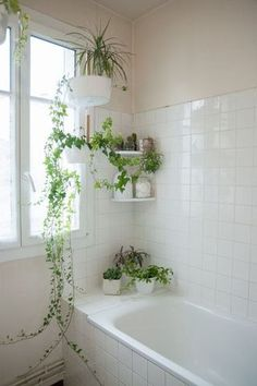 apartment bathroom Bathroom Design Ideas for your Home from boldly tiled floors to chandeliers, these beautiful bathrooms offer enough design inspo to jumpstart a years worth of DIYs and remodels Indoor Garden, Indoor Plants, Hanging Plants, Indoor Ivy, Potted Plants, English Ivy Indoor, Pothos Plant, Ivy Plants, Diy Hanging