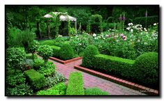Herb Garden - Recommendations On Organic Horticulture For First Time Gardeners >>> Learn more by visiting the image link. Boxwood Garden, Garden Hedges, Backyard Vegetable Gardens, Herb Garden, Small Garden Layout, Landscape Design, Garden Design, Organic Horticulture, Dream Garden