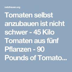 Tomaten selbst anzubauen ist nicht schwer - 45 Kilo Tomaten aus fünf Pflanzen - 90 Pounds of Tomatoes from 5 Plants - netzfrauen– netzfrauen Diy And Crafts, Tips, Plants, Gardening, Brunch, Survival, Shabby, Building, Outdoor
