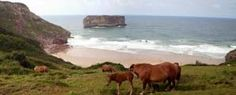 10 lugares imprescindibles en Asturias Water, Places, Outdoor, Animals, Traveling, Gripe Water, Outdoors, Animales, Animaux