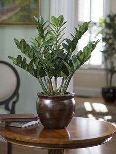 take a look at these 19 best houseplants if youu0027re potted