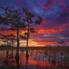 Pahayokee, Everglades National Park, Florida, cypress, river of grass, photo