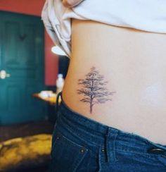 Pine Tree by Nando