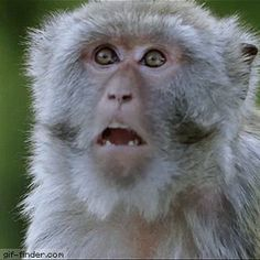 Image result for monkey lips gif