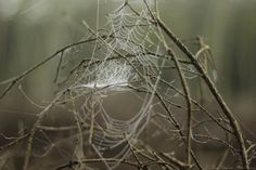 Dew by Laura Dragulin on 500px Good morning, dew! oh, how I've missed you! Sommet Du Mont Saint Jacques.  http://lauradragulin.com/2014/10/03/forestology/ #50mm #branch #branches #dew #forest #forestology #light #morning dew #morning silence #silence #spider #spider web #sunrise #water