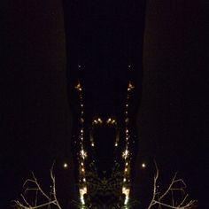 Strani animali della notte... Illusione!