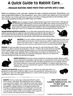 A quick guide to rabbit care