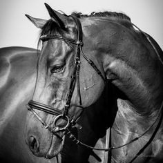 Cauis, equimodello per gioco #oldracer #racehorse #equitation #equestrian #passion #petphotography #horsephotography
