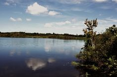 Sawgrass Lake - view from the boardwalk