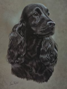 Black Cocker Spaniel Print by Brian Hupfield