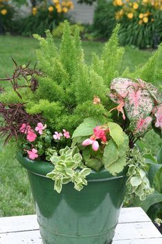 Good pot plant idea