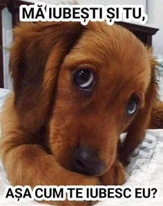 Dog Pictures, Funny Pictures, Animals And Pets, Cute Animals, Dachshund, Dogs, Memes, Sweet, Sagittarius