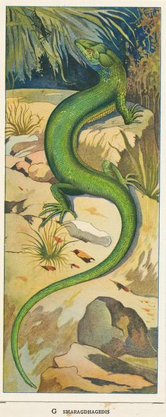 All sizes | Zeewateraquarium en terrarium 1930 ill pag 76 JPG, via Flickr.
