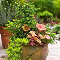 container garden plan--need to learn how to do this. Have taken the first step, bought lots of containers :)