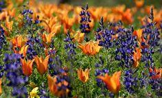 Blue on Orange...