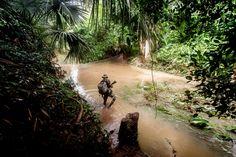 Picture of a Thai ranger walking through a stream