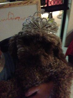 Princess of the Wookees