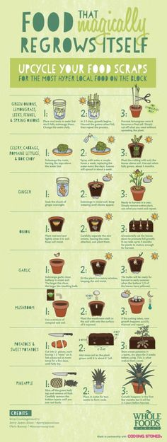 Upcycle Your Food Scraps Flowers, Plants & Planters