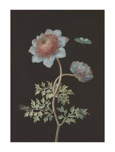 Barbara Regina Dietzsch (Nuremberg 1706-1783) A buttercup with a butterfly and an insect Estimate GBP 4,000 - GBP 6,000 (USD 5,044 - USD 7,566)