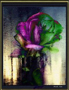 blå rose i lyset fra elven.